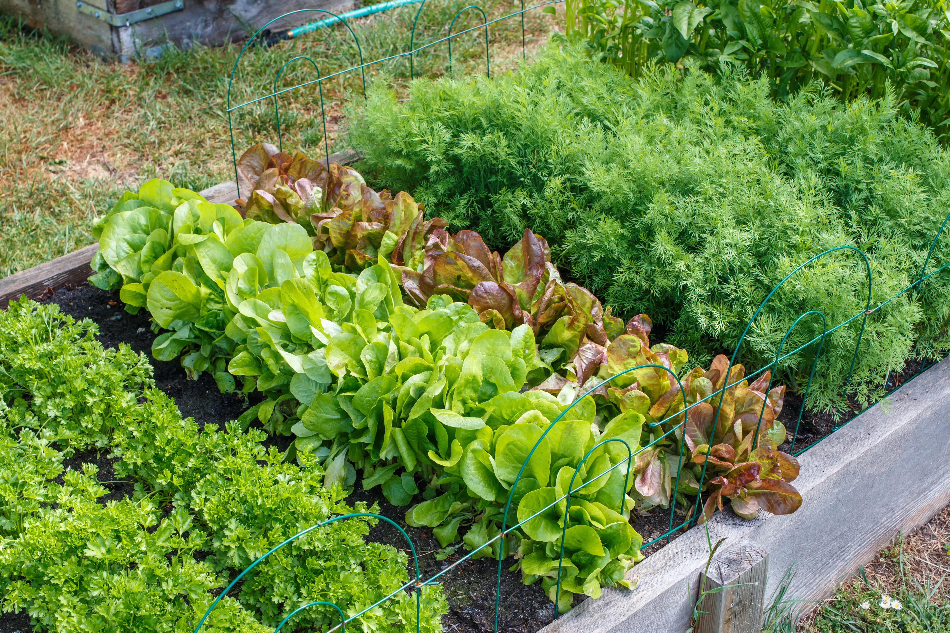 microBIOMETER® Soil Testing in New Zealand garden community