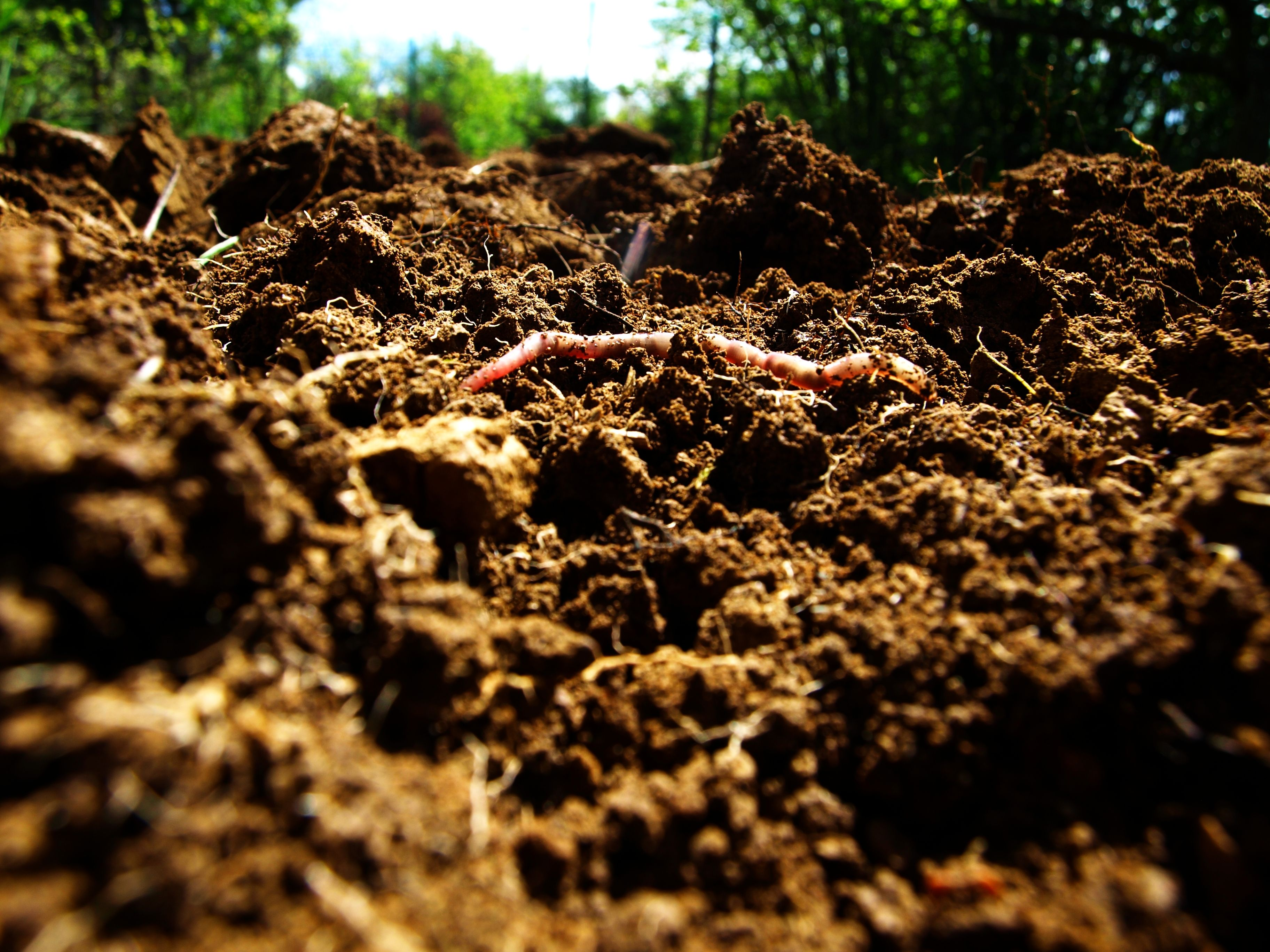 The Role Microbes Play in Increasing Soil Fertility