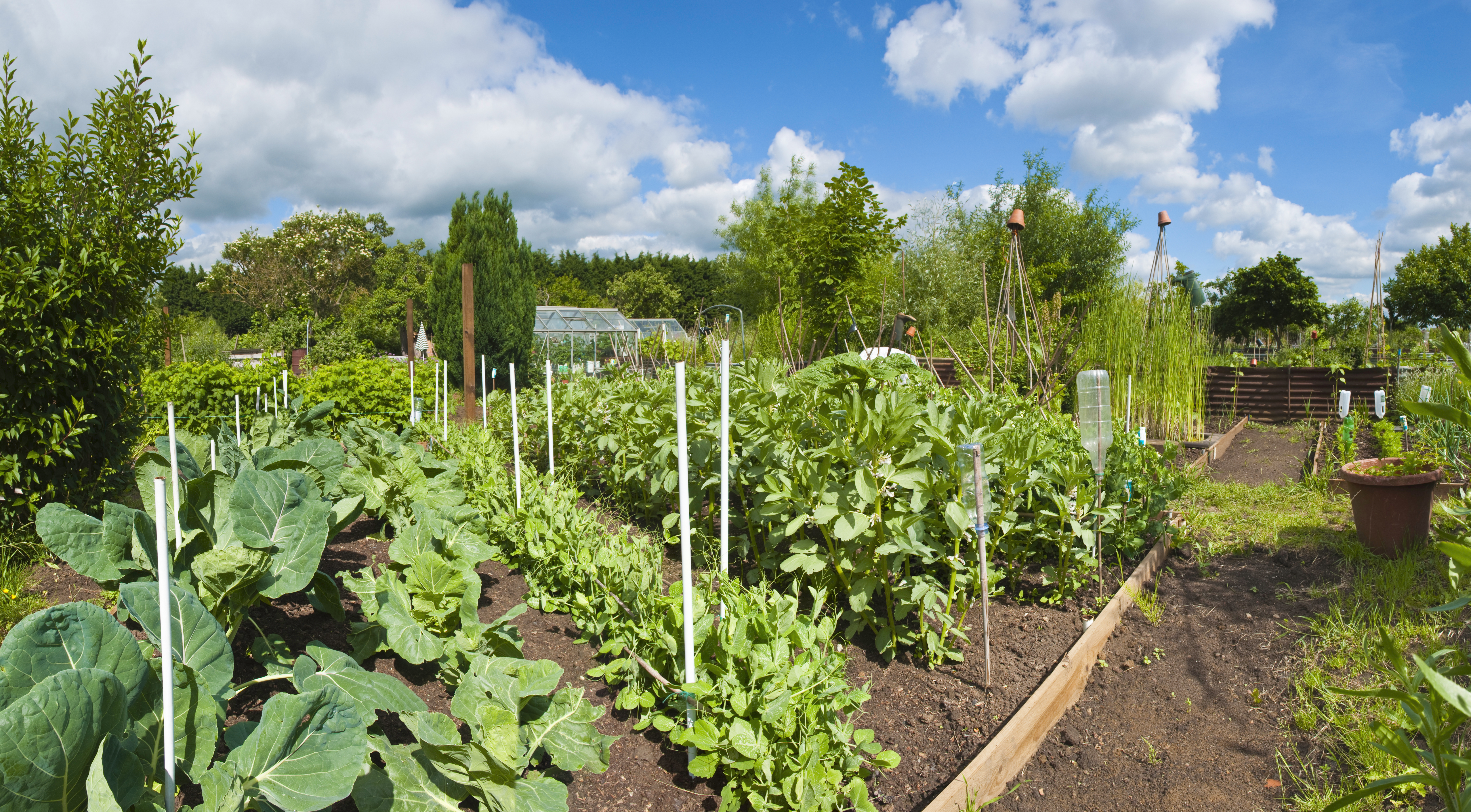 Community gardening with microBIOMETER®