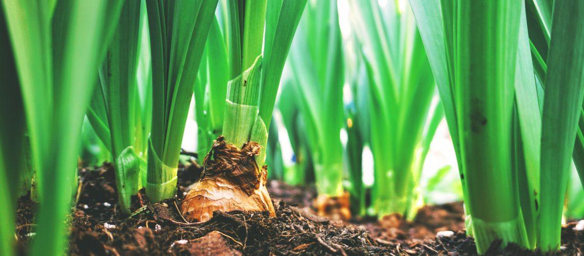 close-up-photo-of-plants-2284170
