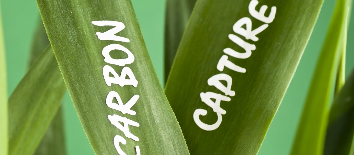 Concept image showing the words CARBON CAPTURE on a green leaves (which in fact capture carbon dioxide). Carbon capture refers to capturing carbon dioxide (CO2) from large burner installations like fossil fuel power plants. The CO2 is subsequently stored in order to prevent it from entering the atmosphere and therefore avoiding its contribution to the greenhouse effect.